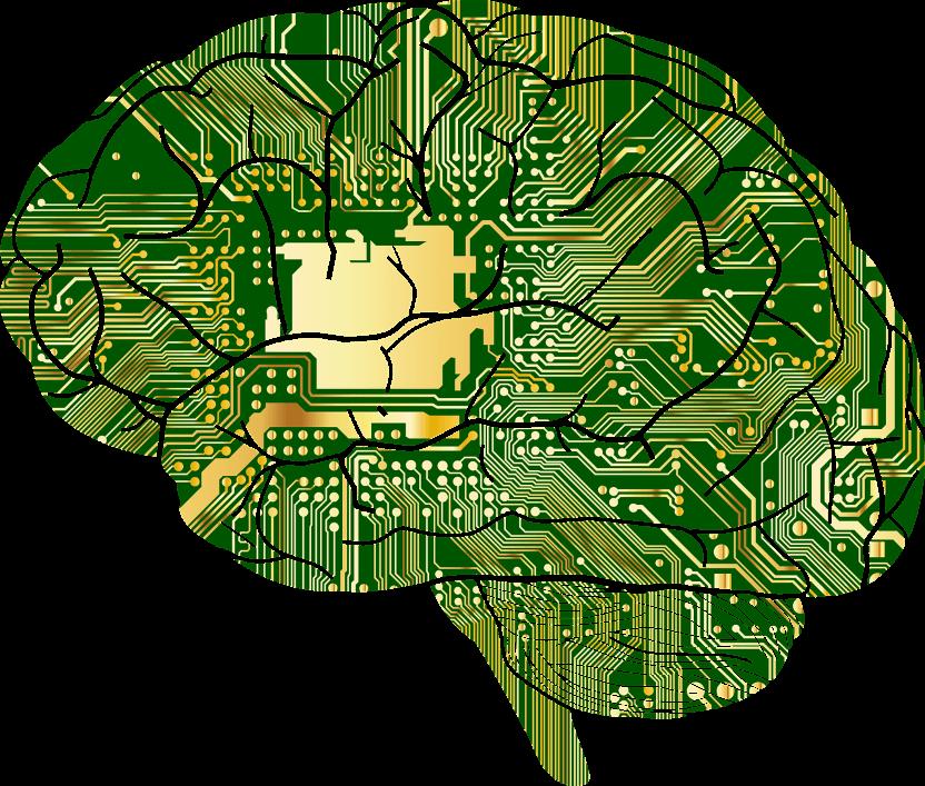 brain program