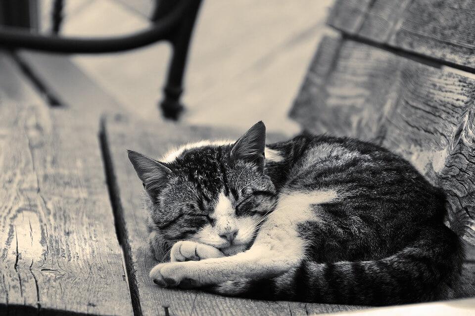 cat-1841562_960_720
