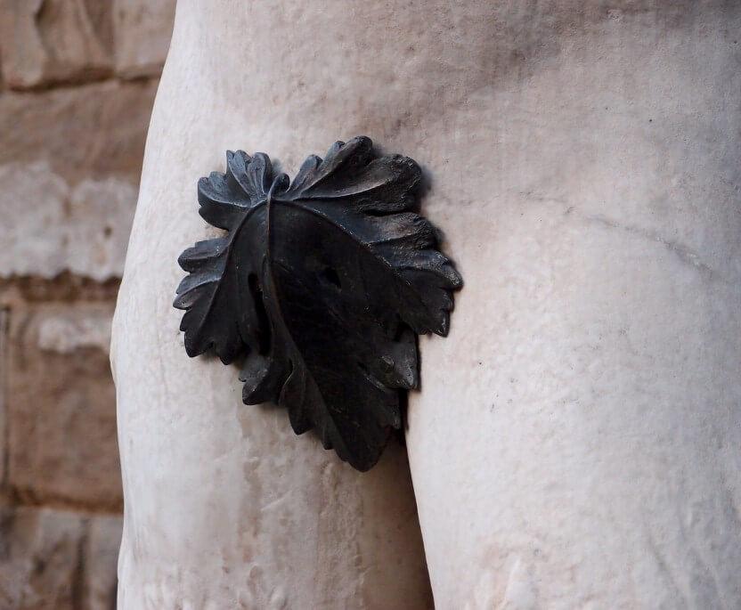 leaf cover penis