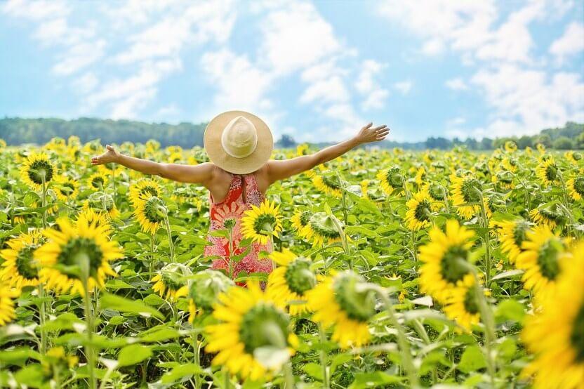 sunflower peaceful